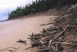 For certain northerners, scenes like this are the image of hydro. This is a hydro-affected shoreline on an island in Sipiwesk Lake on the Nelson River system.